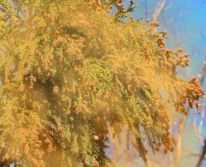 肌トラブルは花粉による外部からの刺激