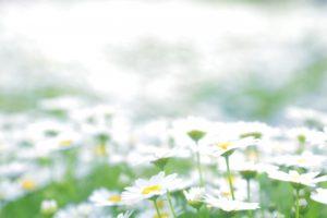天国の花畑